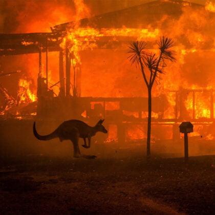 Australia's Bushfires - how you can help